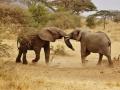 elephant-babies-278525