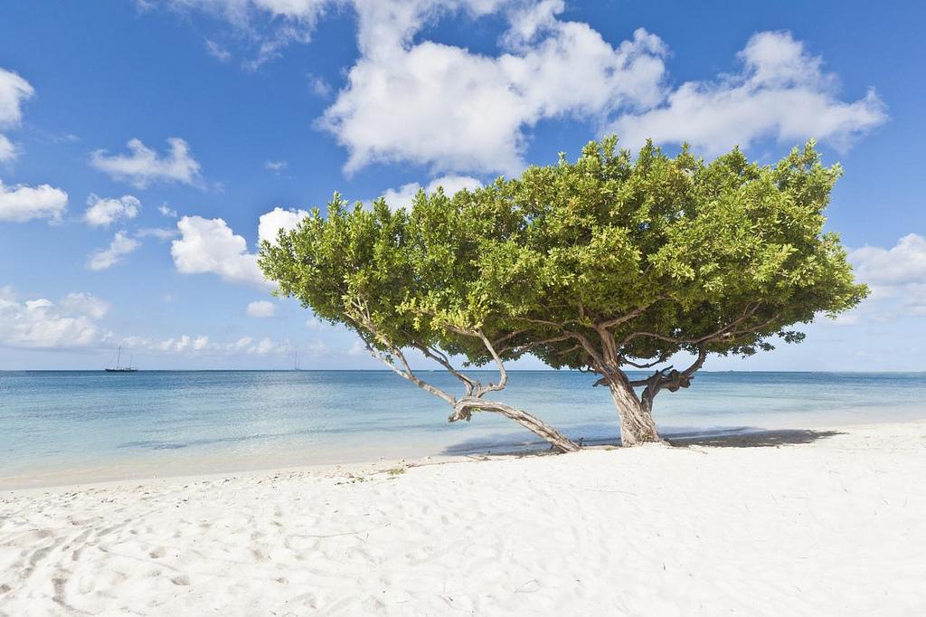 Jedna z nejkrásnějších pláží - Eagle Beach, Aruba