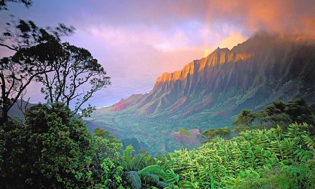 Kauai - líbánky na havajském venkově…