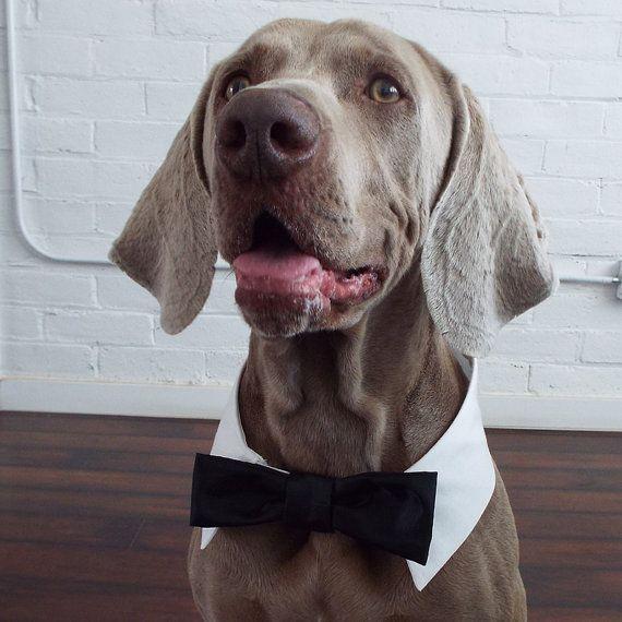 Nezapomeňte na své čtyřnohé miláčky - svatební oblečky jsou IN!