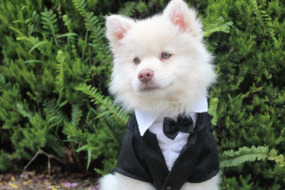 Jak zapojit zvířátka do svatebního dne?